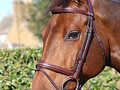 Dy'on Flash noseband bridle New english collection