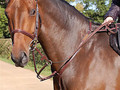 Dy'on  Breastplate and running martingale attachment New English collection