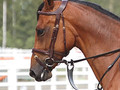 "Dy'on ""Difference"" therapeutic bridle with flash noseband"