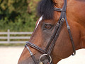 Dy'on Flash noseband bridle Working collection