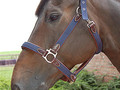 Dy'on Nylon head collar Working collection