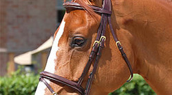 Dy'on Flash noseband bridle