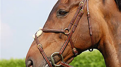 Dy'on Figure 8 noseband bridle