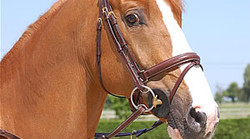Dy'on Large flash noseband bridle