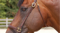 Dy'on Grooming head collar
